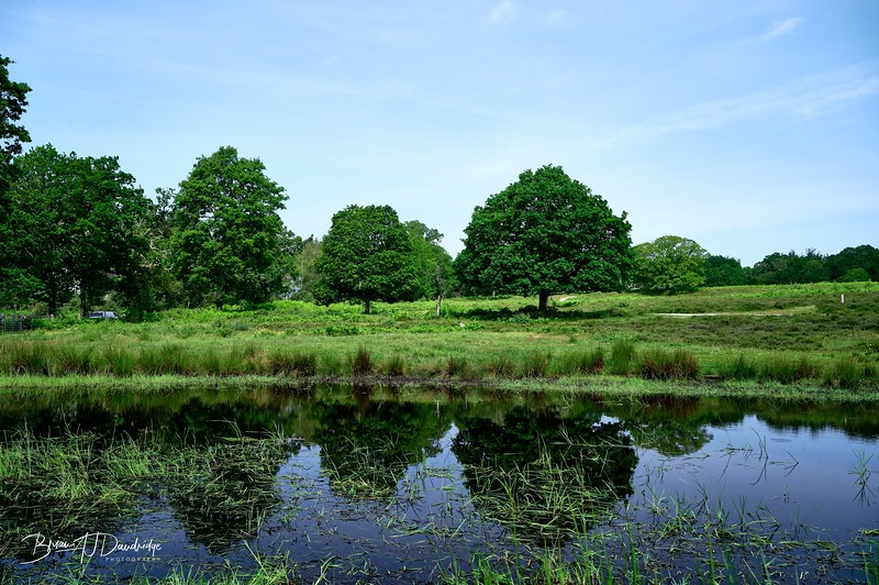 Burton Pond MSCC-1772 - 10-01 am
