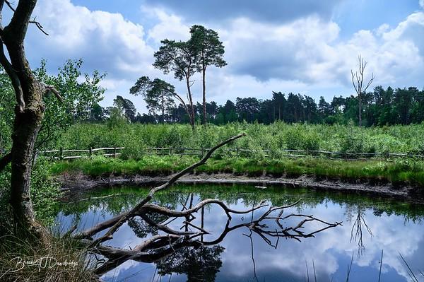 Burton Pond MSCC-1776 - 12-20 pm