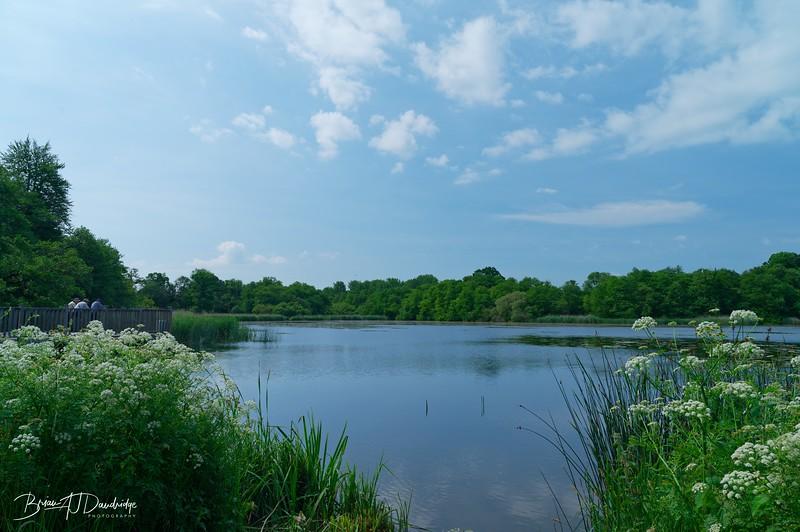 Burton Pond MSCC-1756_DxO