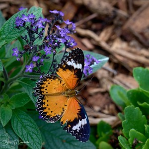 Butterfly Gardens Z6-0748 - 10-10 am