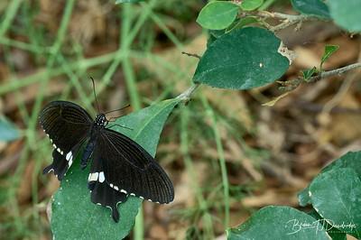 Butterfly Gardens Z6-0755 - 10-13 am