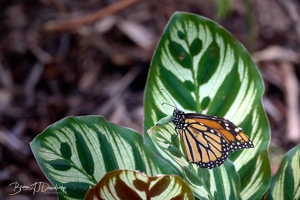 Butterfly Gardens Z6-0758 - 10-14 am 1