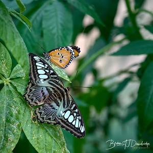Butterfly Gardens Z6-0751 - 10-12 am