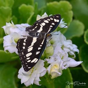 Butterfly Gardens Z6-0774 - 10-17 am 1