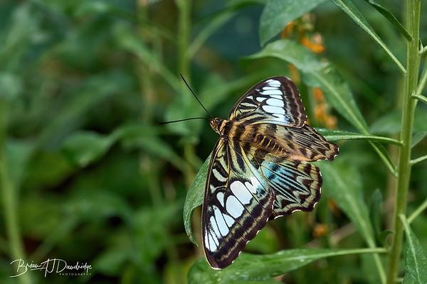 Butterfly Gardens Z7_2-3970 - 10-26 am