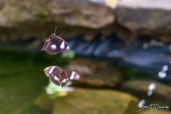 Butterfly Gardens Z7_2-4068 - 10-59 am