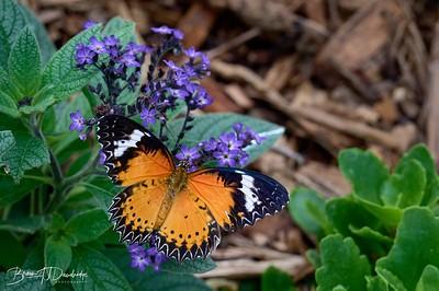 Butterfly Gardens Z6-0746 - 10-10 am 1