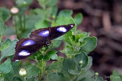 Butterfly Gardens Z6-0768 - 10-16 am