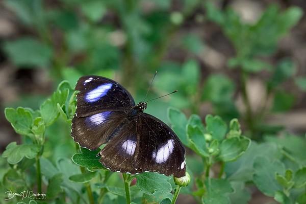 Butterfly Gardens Z6-0765 - 10-16 am
