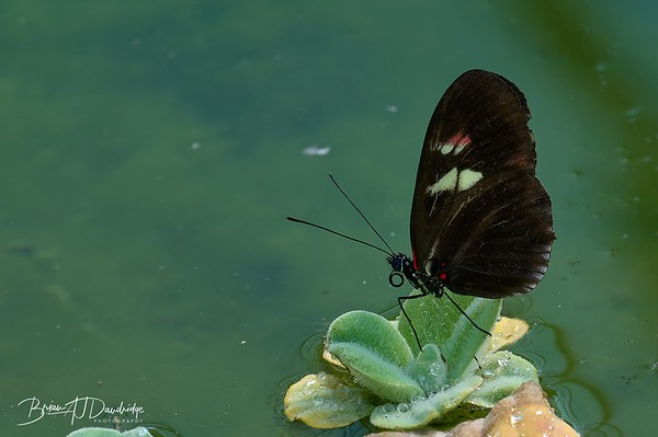 Butterfly Gardens Z6-0788 - 10-25 am