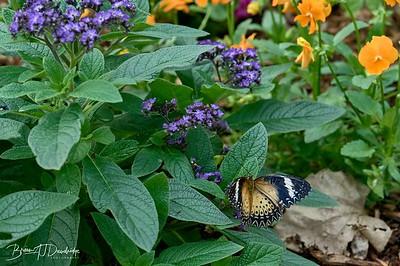 Butterfly Gardens Z6-0737 - 10-09 am