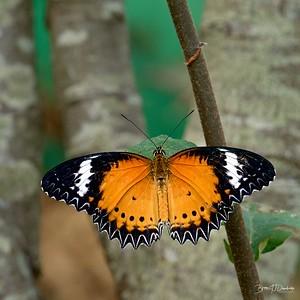 Butterfly Gardens Z6-0771 - 10-17 am 1