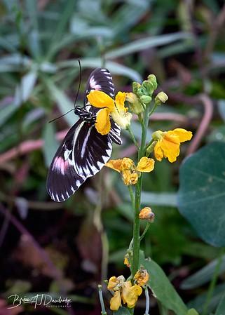 Butterfly Gardens Z6-0762 - 10-15 am
