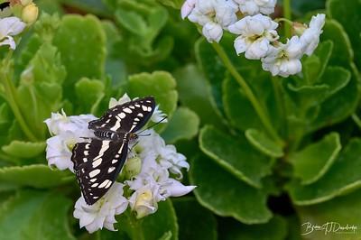 Butterfly Gardens Z6-0774 - 10-17 am