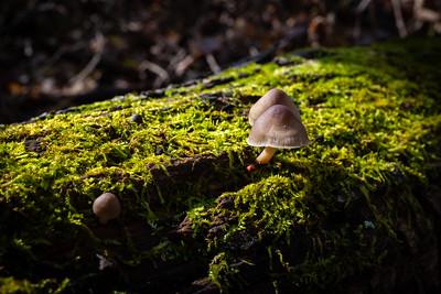 Wild mushrooms :-)