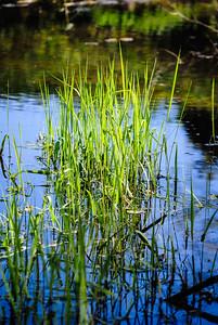 Grass growing water