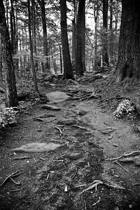 Smoky Mountain Trail