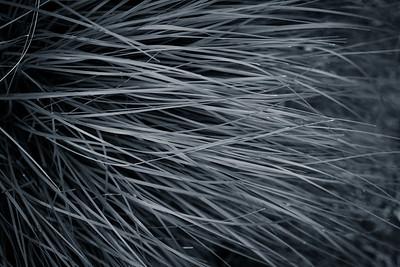 Flowing Blades