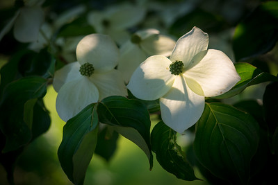 Good morning, Dogwood...