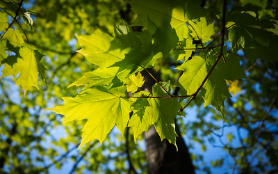 Spring...Glorious Spring :-)