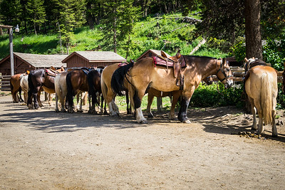 Yellowstone Trail Ride
