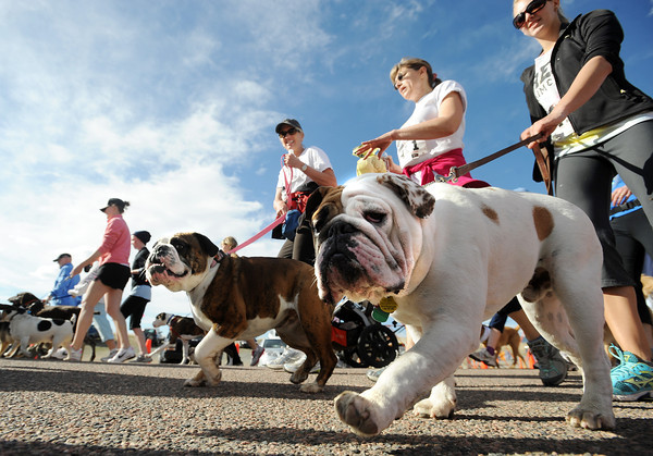 "Dogs and people of all shapes and sizes begin the race.<br /> The 11th Annual Canine Classic 5K was held at the Boulder Reservoir on Sunday.<br /> For a  photo gallery and video of the race, go to  <a href=""http://www.dailycamera.com"">http://www.dailycamera.com</a>.<br /> Cliff Grassmick/ April 17, 2011"