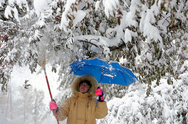 1102SNOWML2.jpg Using an umbrella to keep the snow off her, Jolene Neill knocks the heavy snow from the branches of her front yard tree after last nights snow storm in Louisville, Colorado November 2, 2011.  CAMERA/Mark Leffingwell