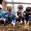 GARDEN.jpg From left to right Kate Sawatzky, Adam Gebben, Abe Kennard, Nassar Al Saadi and Sophie Schreiber, all students at Creekside Elementary School at Martin Park plant lettuce as part of the school's Garden to Table program on the school grounds  Wednesday April 6, 2011. <br /> Photo by Paul Aiken / The Boulder Camera