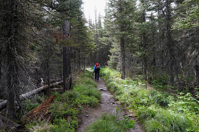le début est dans la foret humide The Scenic Point Trail begins just a half-mile away from the end of the road that leads up to Two Medicine Lake. The trail is more than 10 miles long, as it travels all the way to East Glacier. However, much of the trails length is outside the park boundary and receives little use. Most of the use on the Scenic Point Trail, which is not a lot, is hiking up to the beautiful views around Scenic Point, a rocky, grassy mound that sits at 7500 feet, more than 2400 vertical feet above the Two Medicine Valley. The distance from the trailhead up to Scenic Point is 3.1 miles.