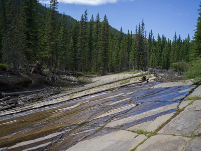 Uprooted trees along a hillside covered in stone, Livingstone Falls, Kananaskis Country, Southern Alberta, Alberta, Canada