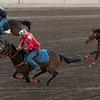 Horseracing at Calgary Stampede, Calgary, Alberta, Canada