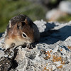 Close-up of Squirrel, Waterton Park, Alberta, Canada