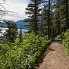 Trail in a forest, Waterton Park, Alberta, Canada