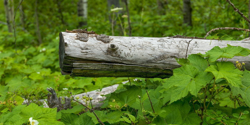Close-up of wood and leaves, Waterton Lakes National Park, Alberta, Canada