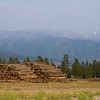 Stack of logs in forest, Fairmont Hot Springs, British Columbia, Canada