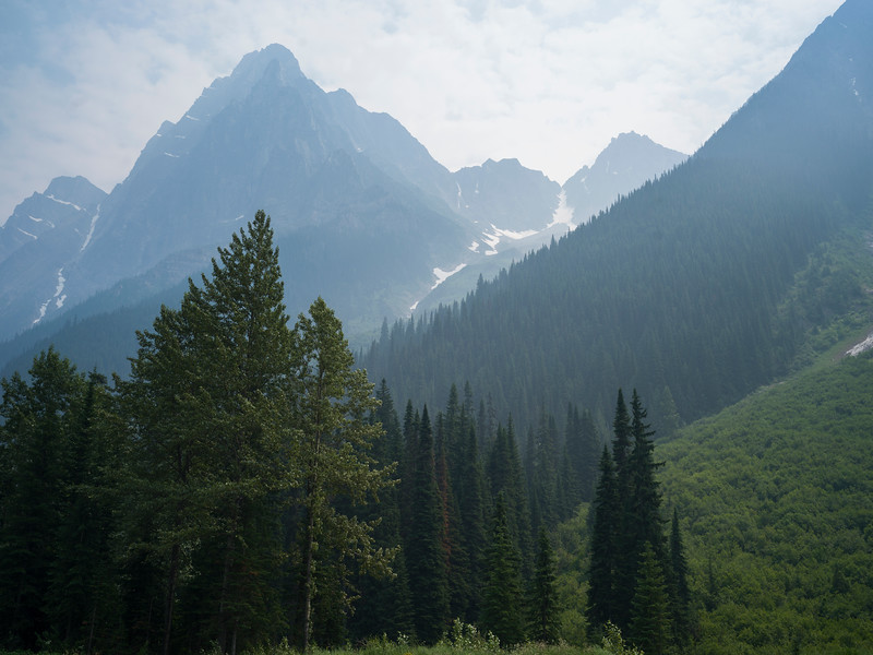 Trees with mountain range in the background, Revelstoke, British Columbia, Canada