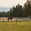 Horse on farm, Fairmont Hot Springs, British Columbia, Canada