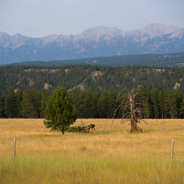 Trees in field with mountain range in the background, Fairmont Hot Springs, British Columbia, Canada