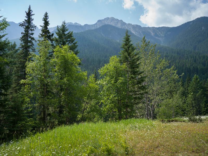 Trees with mountain range in the background, Fairmont Hot Springs, British Columbia, Canada