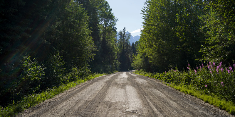 Trees both sides of road, Mt Fernie Provincial Park, British Columbia, Canada