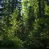 Low angle view of trees, Mount Fernie Provincial Park, British Columbia, Canada