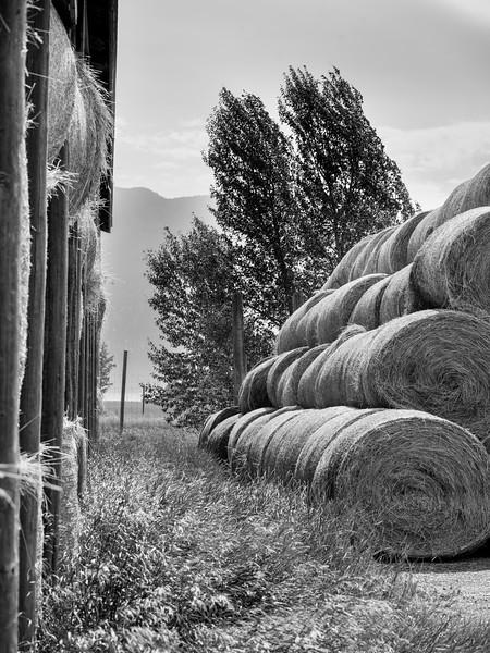 Haystack in field, British Columbia, Canada