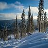 Trees in a ski resort, Sun Peaks Resort, Sun Peaks, British Columbia, Canada
