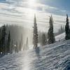 Sunlight through trees in a ski resort, Sun Peaks Resort, Sun Peaks, British Columbia, Canada