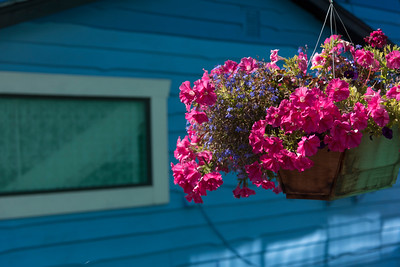Low angle view of flower box, Fisherman's Wharf, Inner Harbour, Victoria, Vancouver Island, British Columbia, Canada