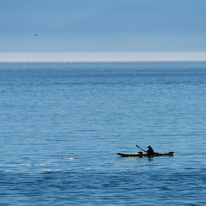 Person kayaking in the ocean, Victoria, Vancouver Island, British Columbia, Canada