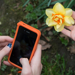Woman hands taking picture of a yellow flower with smartphone, Vancouver, British Columbia, Canada