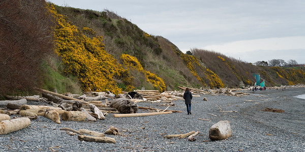 Tourist walking on Spiral Beach, Victoria, British Columbia, Canada
