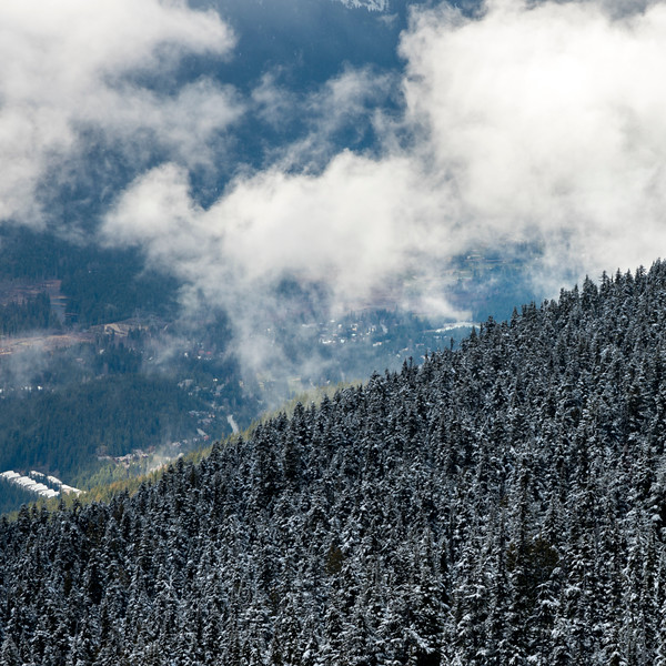 Snow covered trees on mountain, Whistler, British Columbia, Canada