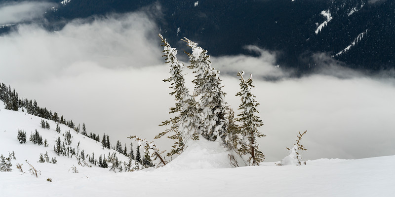 Snow covered trees, Whistler, British Columbia, Canada